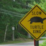 turtles-640x358